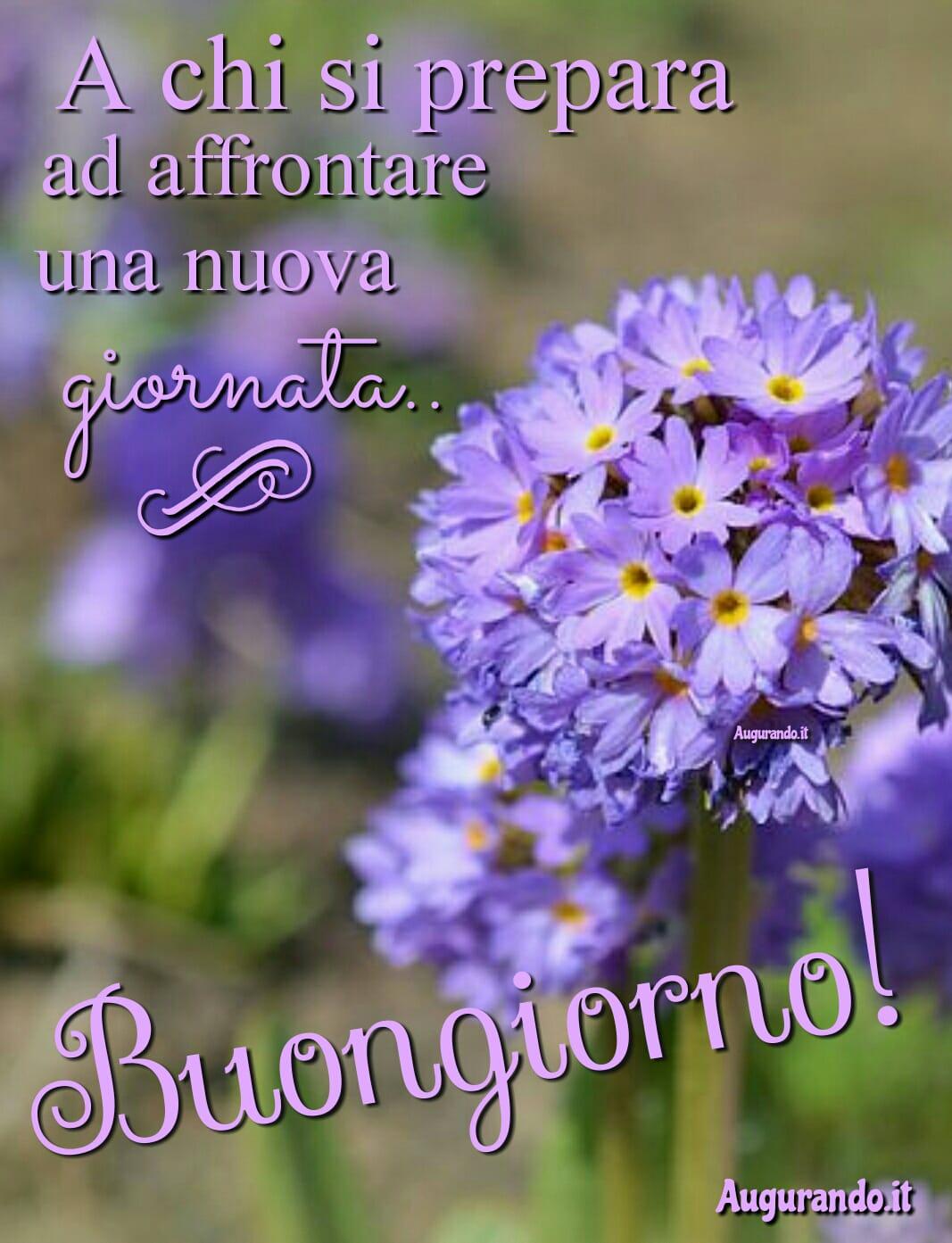 Immagini Buongiorno Le Più Belle E Originali Le Trovi Qui