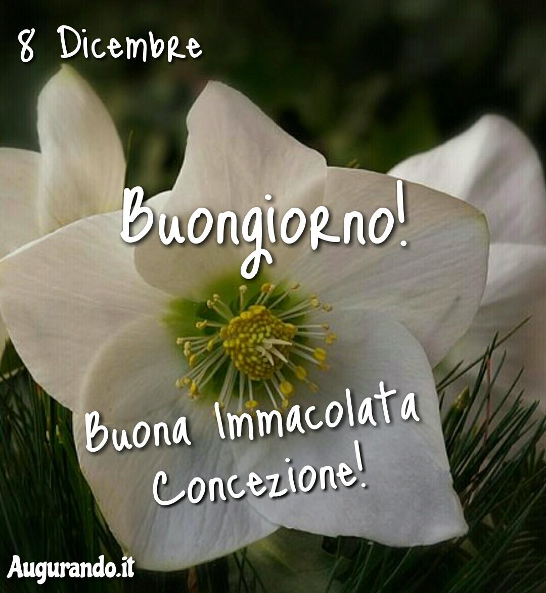 Buona Immacolata Concezione, 8 dicembre, Immacolata, felice Immacolata, serena Immacolata, immagini buona Immacolata, buona Immacolata a tutti, buona Immacolata a te