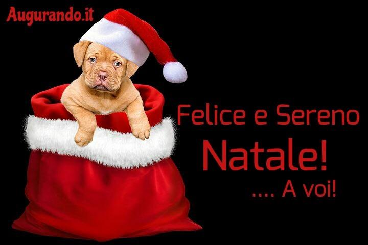 Buon Natale, Natale, felice e sereno Natale, auguri buon Natale, immagini di Buon Natale, dolce, Natale, Buon Natale a tutti